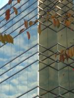 Picture 02building_leaves.jpg