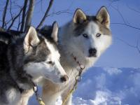 Picture canada_dogsled.jpg