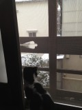 Ada watching the snow