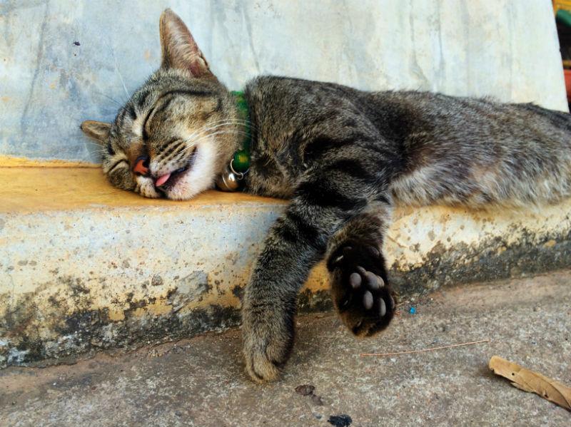 Koh Lanta Cat